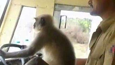 """印度讓猴子""""開公交"""""""