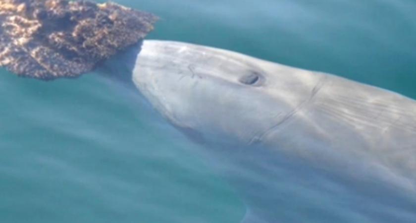 海豚交朋友也講究趣味相投
