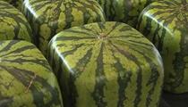日本出售方形西瓜 價格約為1.5萬日元
