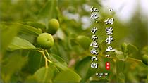"""紅棗,沙子地振興的""""甜蜜事業"""""""