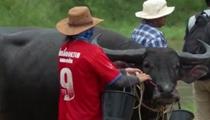 泥地狂奔 泰國舉行水牛賽跑