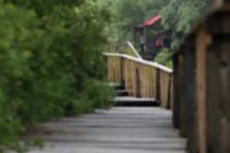 【新時代·幸福美麗新邊疆】蘇木山綠色傳奇