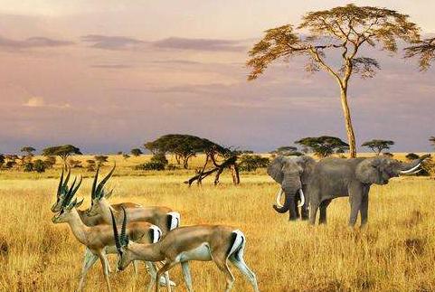 南非推出保障遊客安全計劃
