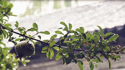 """聽泉城雨聲——它在訴説""""如夢令""""的故事"""