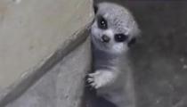 借力網絡 動物奇趣視頻受追捧