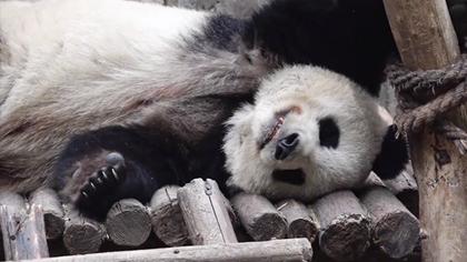 熊貓牌雞湯,好喝不膩