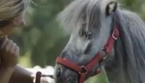 世界最小 五歲公馬身高僅56.7厘米