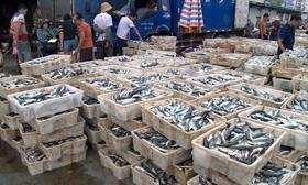 豐收的味道|漁船歸來魚滿艙