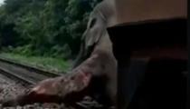 危險鐵路 又有大象被火車撞重傷