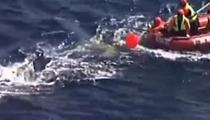 暖心!幼鯨被困防鯊網 人類展開大救援