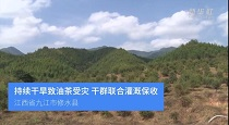 江西修水:幹旱持續油茶受災 幹群合力灌溉保收