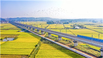 壯觀!航拍昌贛高鐵穿越金色稻田
