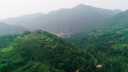 河南東虎嶺村《連翹花盛開的地方》