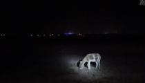內蒙古:監控視頻拍到蒙古野驢活動蹤跡