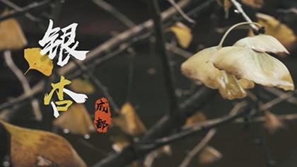 """銀杏染初冬,成都這些銀杏""""打卡地""""安排上了!"""