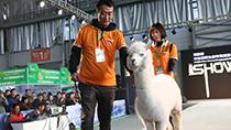 萌獸盛宴!第四屆中國昆明東盟寵物博覽會開幕