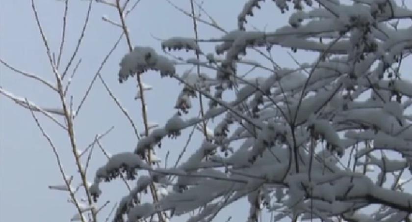 山東青州:仰天山國家森林公園迎來降雪