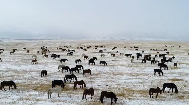 甘肅:祁連山下馬蹄踏雪