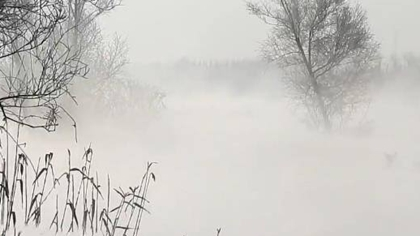 """山西:水氣蒸騰 """"桑幹冬暖""""美如仙境"""
