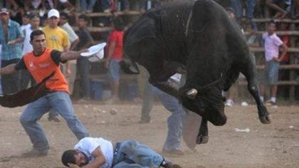 悲劇! 舍命鬥牛 印豐收節致上百人受傷