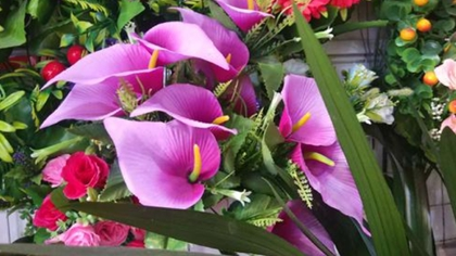 廣東順德:春花爛漫 大良花市年味濃