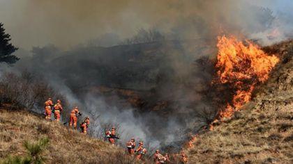 嚴查!追蹤溯源 澳宣布啟動林火調查