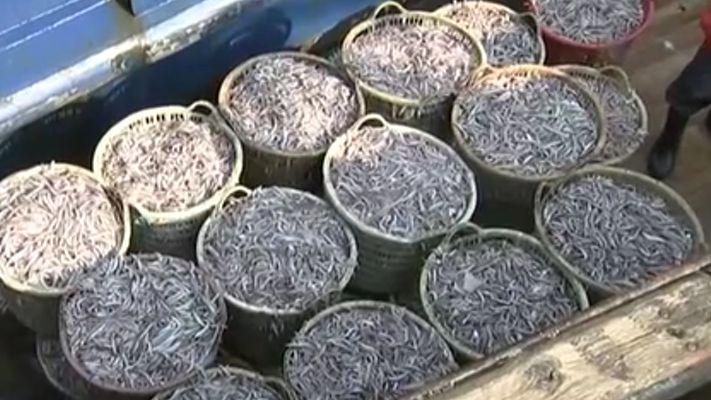 福建東山:開春首出海 歸來魚滿倉