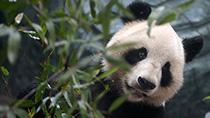 世界野生動植物日|記住它們!留住它們!