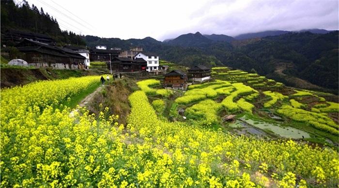 梯田,村寨,油菜花……春天真的可以這麼美