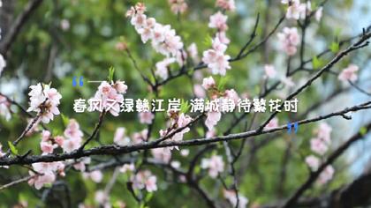 南昌:春風又綠贛江岸 滿城靜待繁花時