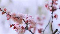 桃紅、嫩綠、鵝黃、淡紫……這就是春天的氣息!