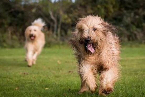 安全提醒 謹防犬只傷人