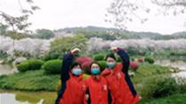 Vlog:真美!我們看到了武漢櫻花