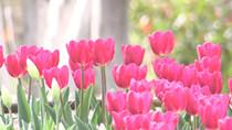 微視頻:久違了!公園和春天如約而至