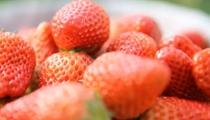 安徽霍邱:線上銷售草莓助脫貧