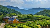 【春來到·山間煮春茶】福州茉莉花茶飄香四海