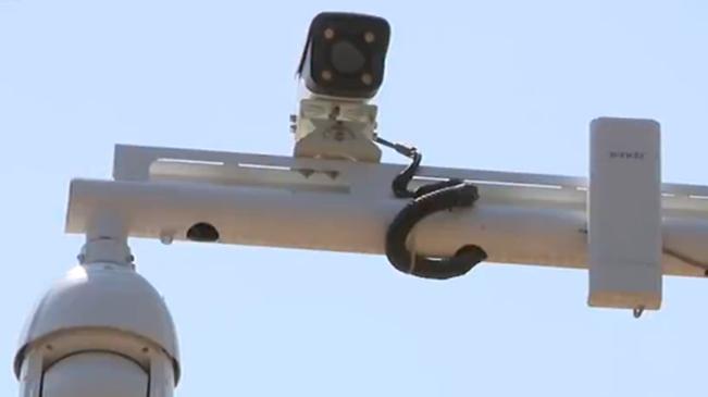 雲南昭通:鳳凰山安裝視頻係統 全方位護林防火
