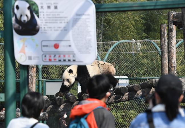 北京動物園恢復開園 遊客須實名預約購票