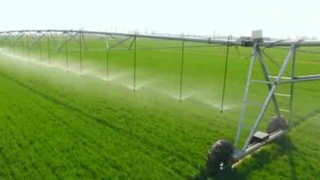 山東德州:小麥清明拔三節 春灌追肥正當時