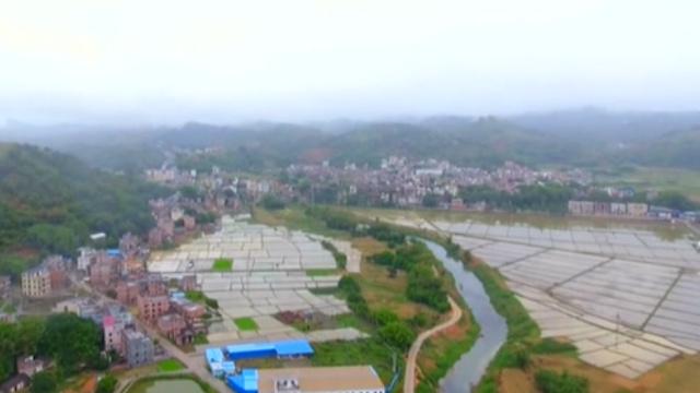 廣東:擴大機械作業面積 早稻栽插完成962萬畝
