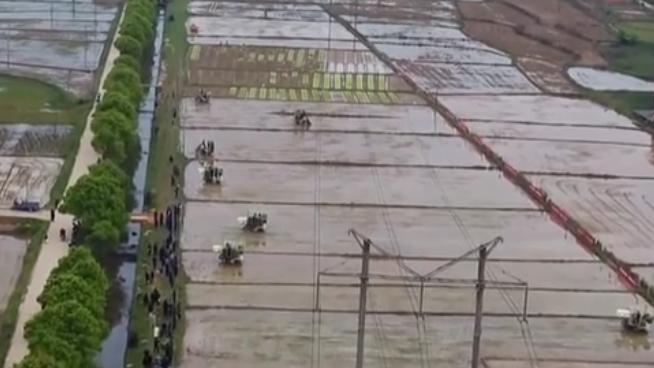湖南:開展機拋機插秧作業補貼試點