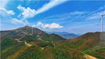 江西興國:紅杜鵑 綠動能