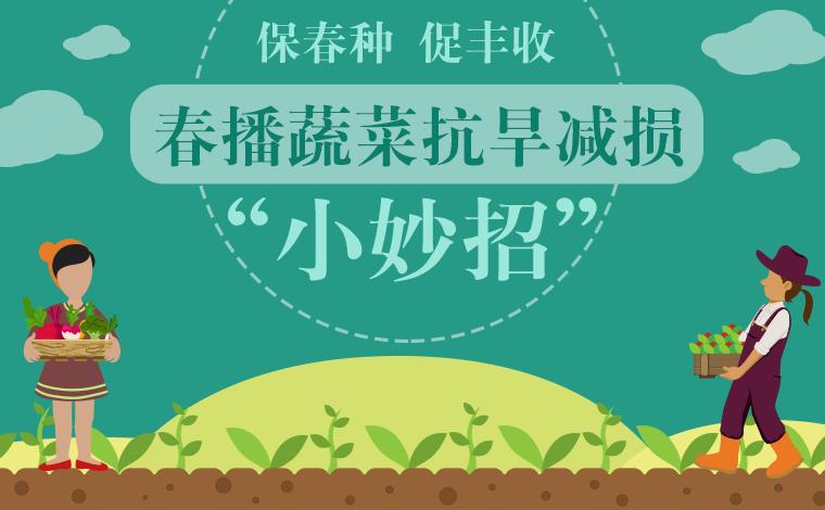 """春播蔬菜抗旱減損""""小妙招"""""""