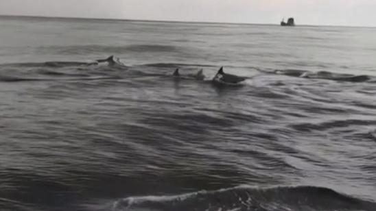 寬吻海豚現身泰國斯米蘭群島