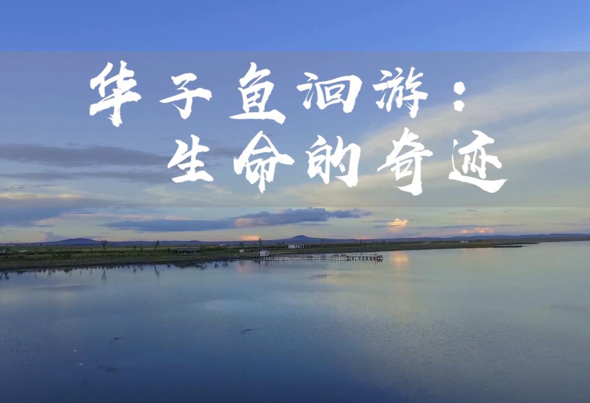 華子魚洄遊:生命的奇跡