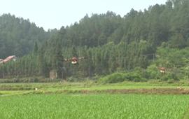 江西吉安:高科技助力田間管理 保障夏糧豐收