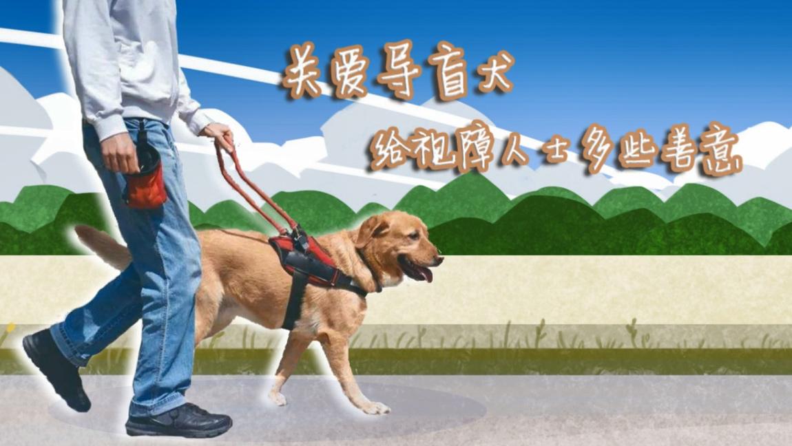 全國助殘日|關愛導盲犬 給視障人士多些善意