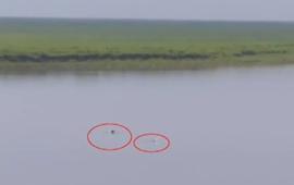 江西:鄱陽湖流域頻現江豚