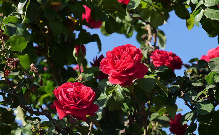 鏡頭記錄陽宗海畔的花間故事