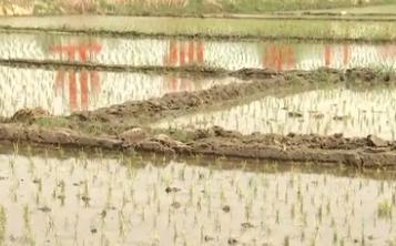 黑龍江:大米石上種 高品質助農民增收